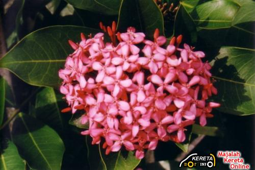 EXORA IS NOT A NAME OF A FLOWER - PROTON SAYS